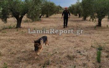 Εντείνεται η αναζήτηση για τον 75χρονο που αγνοείται στην Ιστιαία - Επιστρατεύτηκε ειδικός σκύλος της ΕΜΑΚ