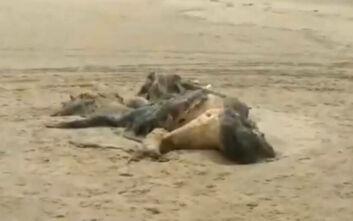 Μυστηριώδες πλάσμα 4,5 μέτρων ξεβράστηκε σε παραλία του Λίβερπουλ