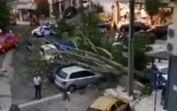 Πτώσεις δέντρων και προβλήματα από τη δυνατή νεροποντή που έπληξε την Κέρκυρα