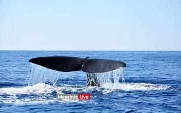 Έκαναν βόλτα με το σκάφος και είδαν δίπλα τους μια φάλαινα-φυσητήρα 20 μέτρων