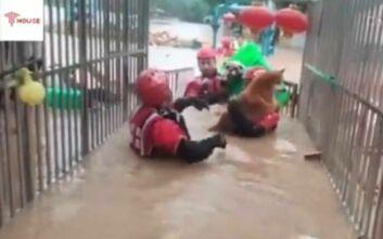 Μάχη των πυροσβεστών για να σώσουν σκυλάκια από τα λασπόνερα στην Κίνα