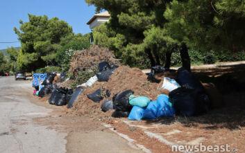 Αυτοψία του newsbeast.gr στα Βόρεια Προάστια: Ποιοι δήμοι είναι καθαροί από ξερόχορτα, πού εντοπίσαμε πρόβλημα