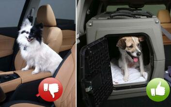 Κατοικίδια στο αυτοκίνητο: Συμβουλές για την ασφάλεια τους από τη Nissan