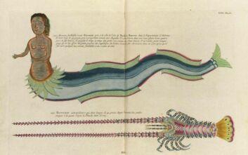 Online πλέον οι «Ιχθύες, καραβίδες και αστακοί...», έγχρωμες απεικονίσεις της θαλάσσιας ζωής από τον 18ο αιώνα
