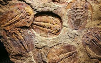 Το μυστηριώδες προϊστορικό πλάσμα που εξαφανίστηκε πριν από 250 εκατ. χρόνια και το μεγάλο μυστικό του