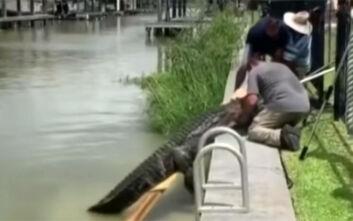 Πέταξε την 4χρονη κόρη του πάνω σε φράχτη για να τη σώσει από τα δόντια κροκόδειλου