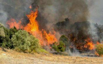 Φωτιά τώρα στην περιοχή Κουταλάς στην Κορινθία