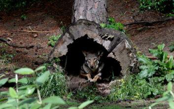 WWF: Μισός αιώνας καταστροφής για την άγρια ζωή, τα δύο τρίτα εξαφανίστηκαν