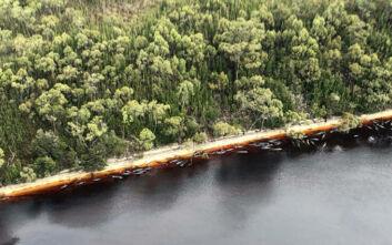 Τραγωδία με νεκρές φάλαινες στην Τασμανία: Οι αρχές προσπαθούν να φτιάξουν σχέδιο απομάκρυνσης των 400 άψυχων ζώων