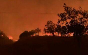 Φωτιά στον Έβρο: Οι ισχυροί άνεμοι αναζωπυρώνουν τις εστίες της πυρκαγιάς