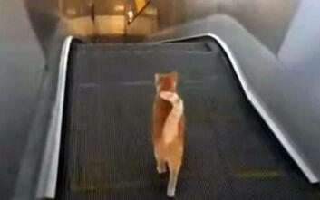 Όταν μια γάτα προσπαθεί να κατέβει μια κυλιόμενη... ανάποδα
