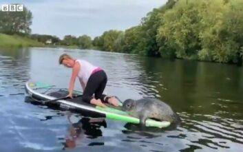 Φώκια κάνει... μάθημα SUP σε ποταμό της Βρετανίας