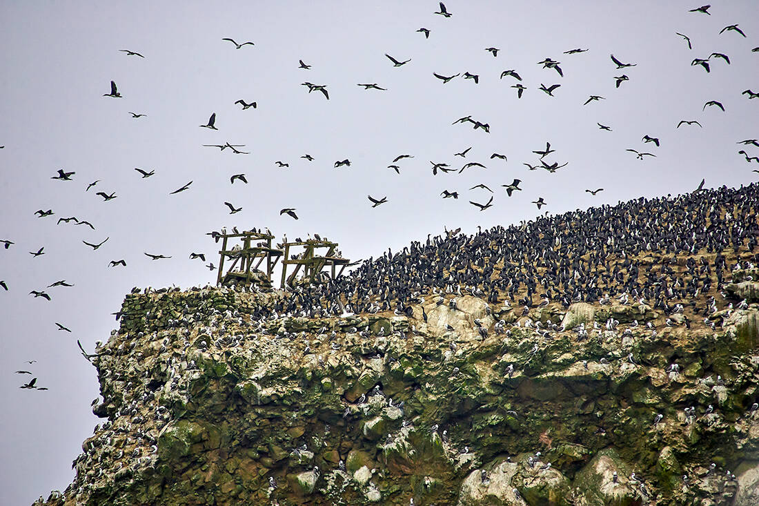 Πώς και γιατί τα περιττώματα των πουλιών αξίζουν πάνω από 1 δισ. ετησίως! – Newsbeast