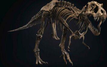 Στο σφυρί ο «Stan» - Δημοπρατείται ο σκελετός ενός από τους μεγαλύτερους γνωστούς Τ-Rex