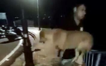 Εξοργιστικό βίντεο: Πήρε το αδέσποτο μια τρυφερή αγκαλιά και… το πέταξε από τη γέφυρα