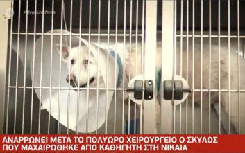 Βίντεο από την κτηνωδία στη Νίκαια: Οι στιγμές μετά την επίθεση στον σκύλο με σουγιά