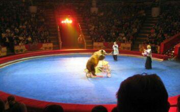 Αρκούδα σκότωσε υπάλληλο του Μεγάλου Τσίρκου της Μόσχας
