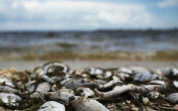 Σε τοξικά φύκια οφείλεται ο μαζικός θάνατος των θαλάσσιων ζώων στην Χερσόνησο της Καμτσάτκα