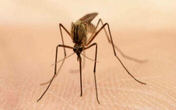 Ολλανδία: Ανακοινώθηκε η πρώτη εγχώρια μόλυνση από τον ιό του Δυτικού Νείλου