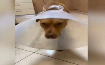 Σε διαθεσιμότητα ο υπάλληλος της ΔΕΗ που κατηγορείται για τον βασανισμό του σκύλου στην Κρήτη