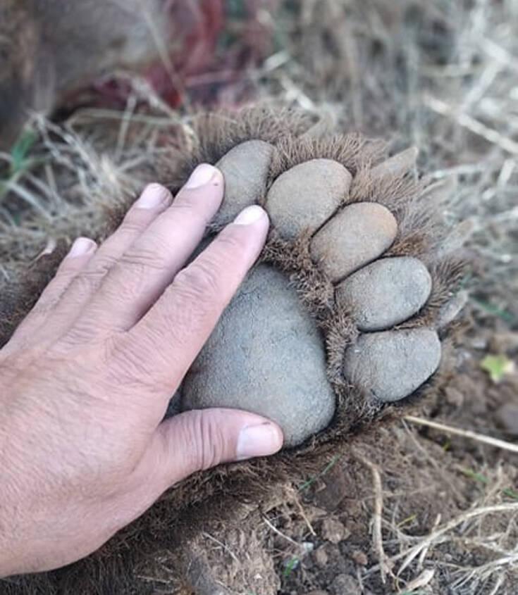 Νεκρή σε τροχαίο αρκούδα 250 κιλών στη Μεσοποταμία Καστοριάς – Newsbeast