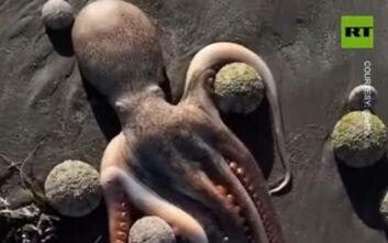 Μαζικοί θάνατοι ζώων στην Καμτσάκα: Βρέθηκαν μεγάλες συγκεντρώσεις τριών ουσιών στα δείγματα νερού
