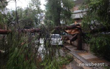 Σε ποιες περιοχές της Αττικής διακόπηκε η κυκλοφορία λόγω πτώσης δέντρων - «Μας βρήκε δύσκολη ημέρα» αναφέρει ο δήμαρχος Ηρακλείου