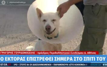 Σπίτι του επιστρέφει ο σκύλος που μαχαιρώθηκε βάναυσα στη Νίκαια