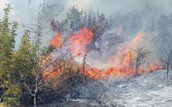Φωτιά τώρα στον Έβρο: Κινδυνεύει το δάσος της Δαδιάς