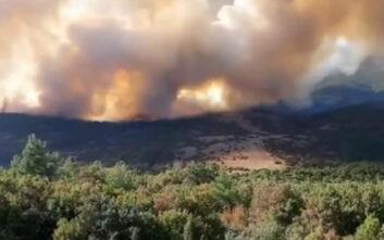 Φωτιά στον Έβρο: Υπεράνθρωπες προσπάθειες να σωθεί το δάσος της Δαδιάς