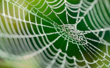 Ο τεράστιος ιστός αράχνης που θα μπορούσε να παγιδεύσει και άνθρωπο