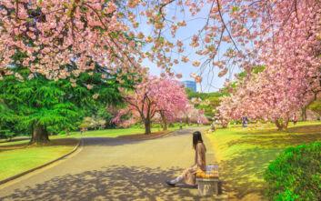 Τηλεργασία στη φύση: Η Ιαπωνία διαμορφώνει τα πάρκα της σε ανοιχτούς χώρους δουλειάς
