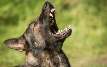 Σοκαριστική επίθεση σκύλων σε κοριτσάκι στην Κορινθία: Έκκληση της μητέρας για να βρεθεί ο ιδιοκτήτης