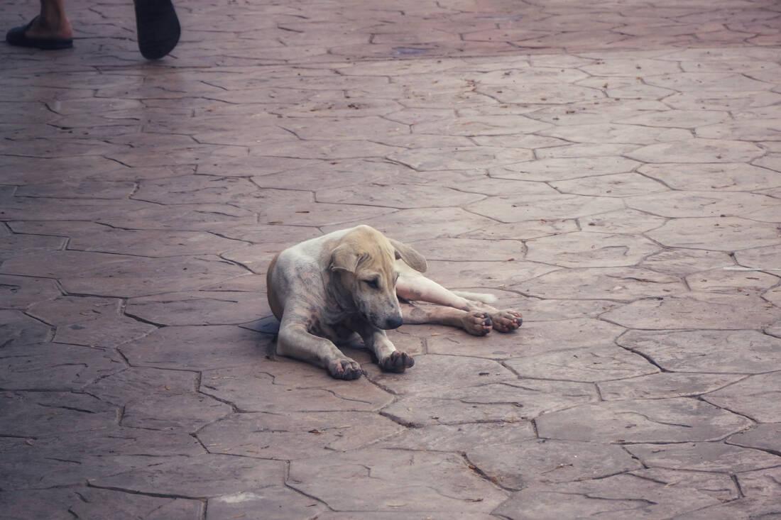 Ποιοι βασανίζουν τα ζώα; Τα κίνητρα και η σκιαγράφηση του ψυχολογικού προφίλ τους 8