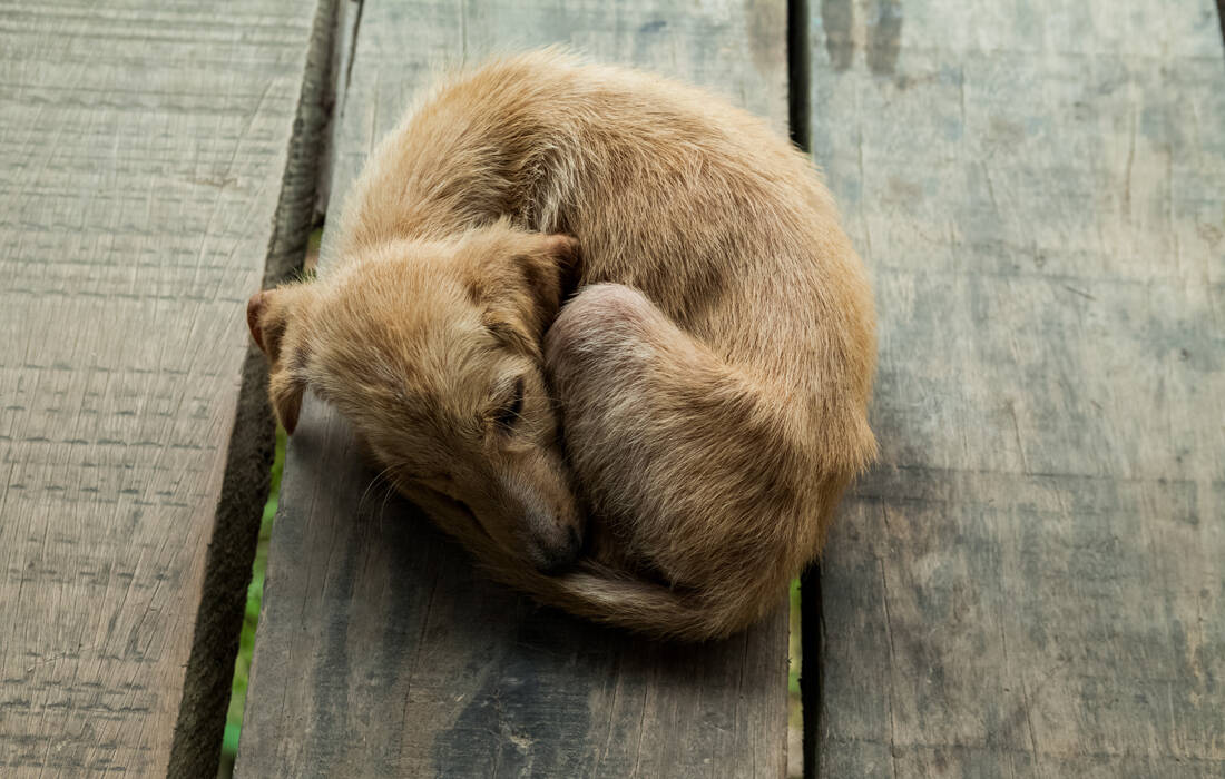 Ποιοι βασανίζουν τα ζώα; Τα κίνητρα και η σκιαγράφηση του ψυχολογικού προφίλ τους 9
