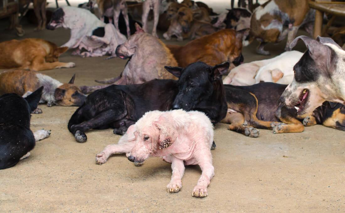 Ποιοι βασανίζουν τα ζώα; Τα κίνητρα και η σκιαγράφηση του ψυχολογικού προφίλ τους 10