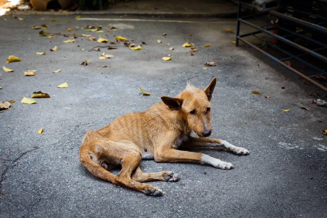 Ποιοι βασανίζουν τα ζώα; Τα κίνητρα και η σκιαγράφηση του ψυχολογικού προφίλ τους 7