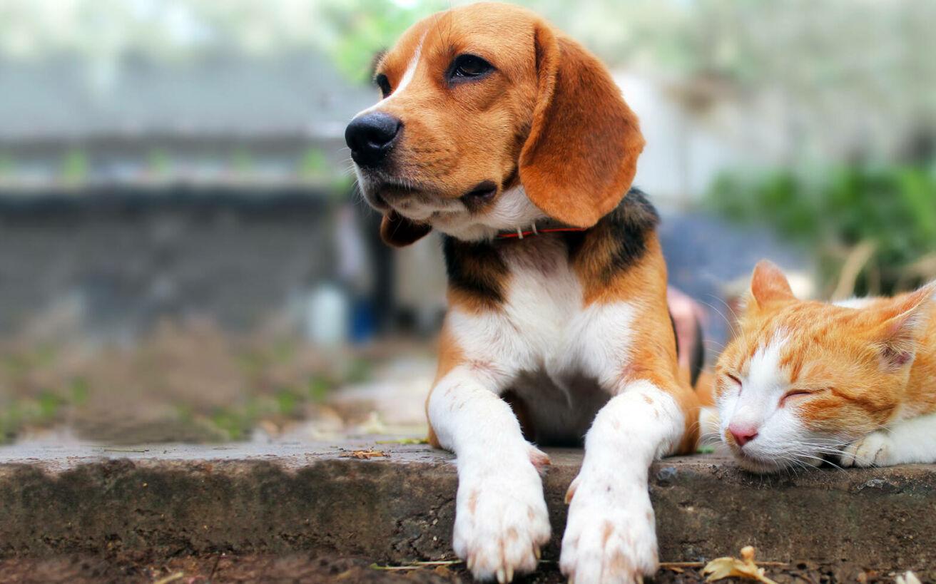 Ποιοι βασανίζουν τα ζώα; Τα κίνητρα και η σκιαγράφηση του ψυχολογικού προφίλ τους
