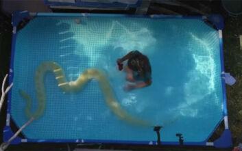 Το 8χρονο κορίτσι που κολυμπά στην πισίνα με τον 3,3 μέτρων πύθωνά της