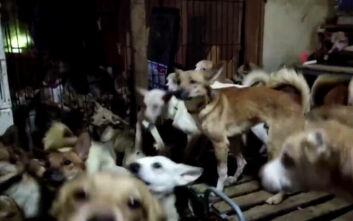 Φρίκη στην Ιαπωνία: Βρήκαν μέσα σε σπίτι 164 σκελετωμένα σκυλιά
