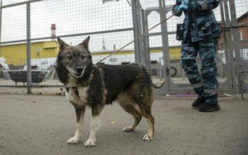 Έρευνα από τη Φινλανδία: Πιο αξιόπιστοι οι σκύλοι ανίχνευσης κορονοϊού από τα τεστ