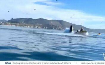Στιγμές αγωνίας στην Καλιφόρνια: Φάλαινα «κατάπιε» καγιάκ με δύο γυναίκες πάνω