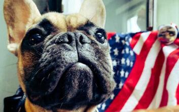 Ο δήμαρχος πόλης του Κεντάκι είναι... σκύλος