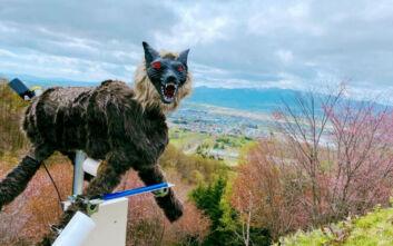 Στην Ιαπωνία βάζουν λύκους-ρομπότ για να διώχνουν τις αρκούδες