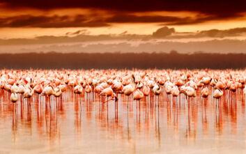Μια θάλασσα από… φλαμίνγκο στον επίγειο παράδεισο της Κένυας
