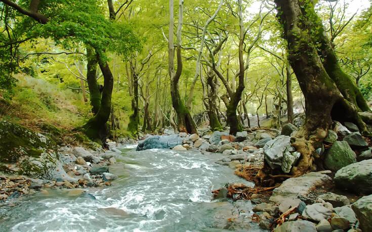 Τα ευρωπαϊκά δάση απειλούνται από την κλιματική αλλαγή – Newsbeast