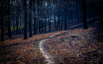 Η σκοτεινή φήμη για το δάσος «αυτοκτονίας» στην Ιαπωνία