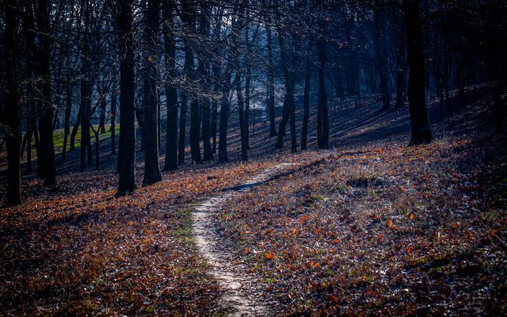 Η σκοτεινή φήμη για το δάσος «αυτοκτονίας» στην Ιαπωνία – Newsbeast