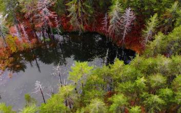Ζορίκα, μια παραμυθένια λίμνη με νούφαρα