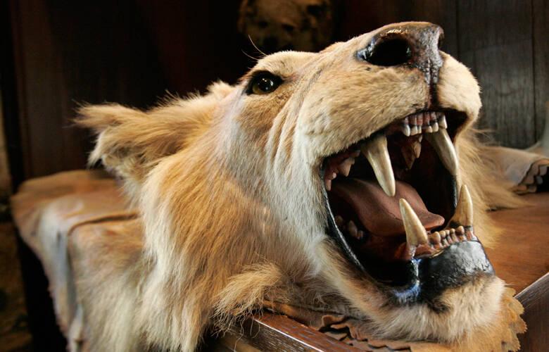 Ένα ζώο ανά τρία λεπτά σκότωναν οι κυνηγοί την προηγούμενη δεκαετία – Newsbeast
